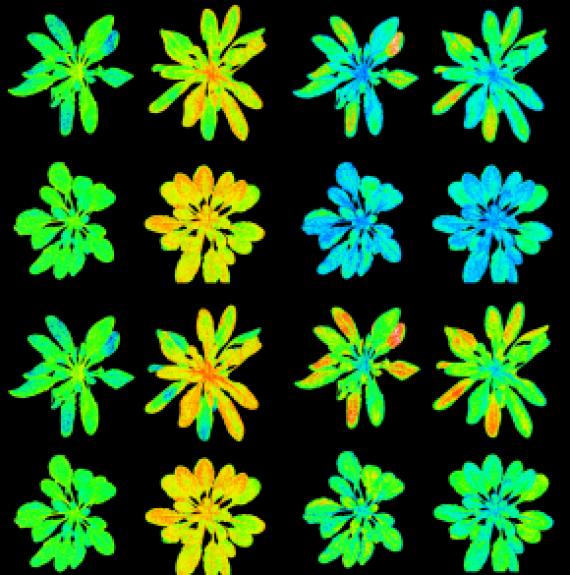 Het kan toch: Meer zon vangen in een plant