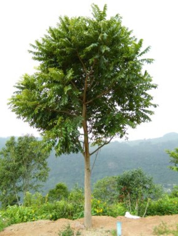 Tropical forests can't cope with heat