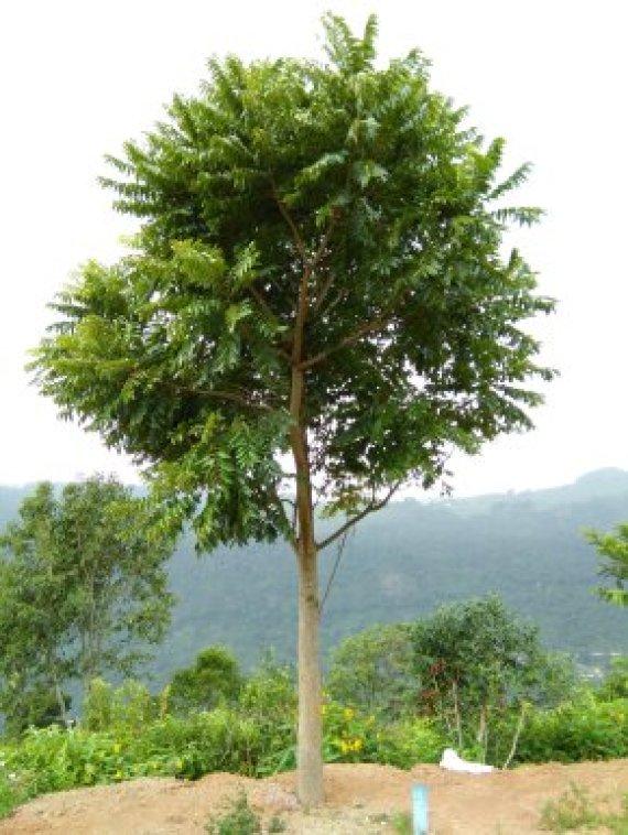 Tropisch bos kan niet tegen warmte