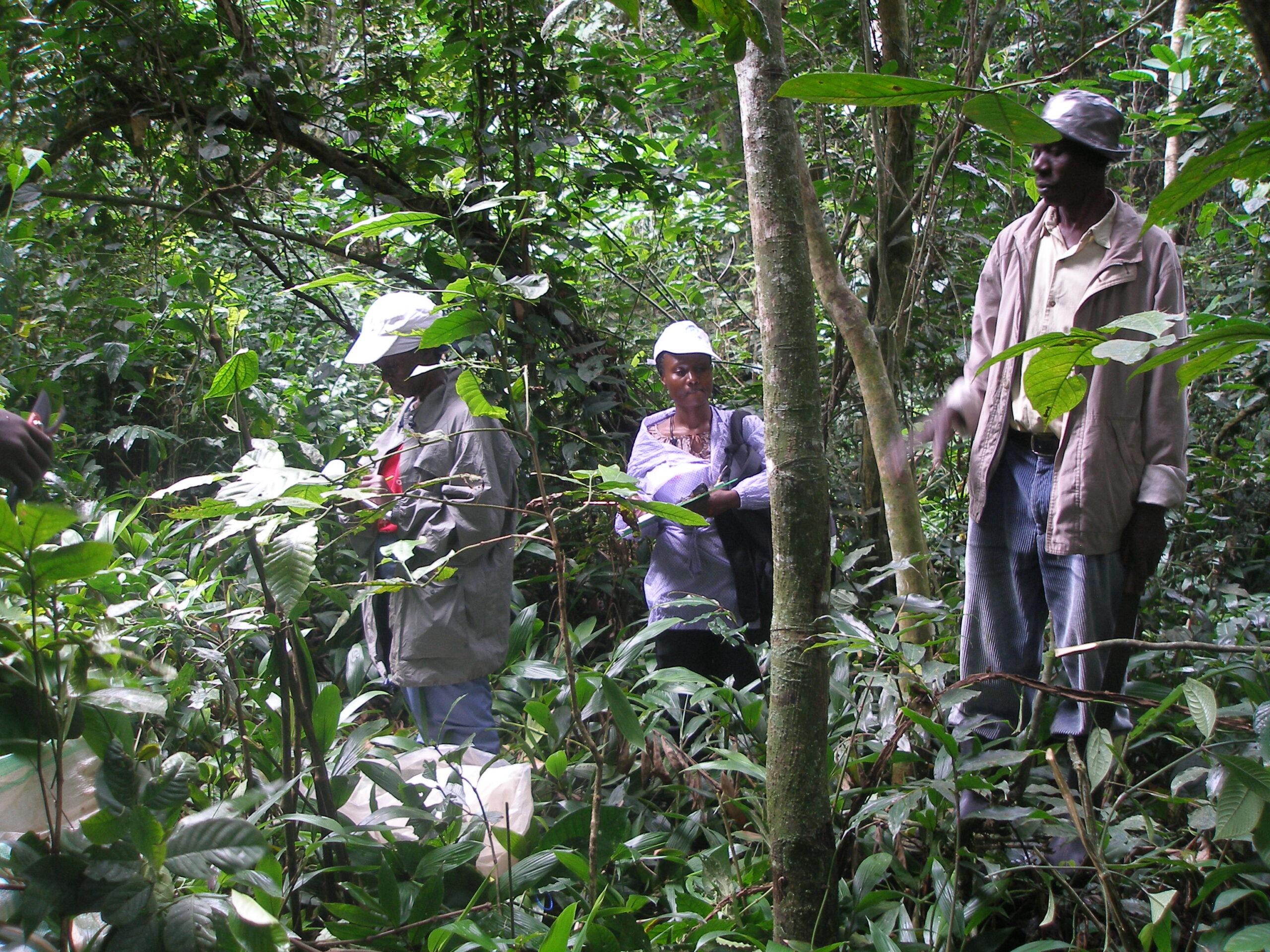 Promovendus vindt droogte-resistente koffieplanten