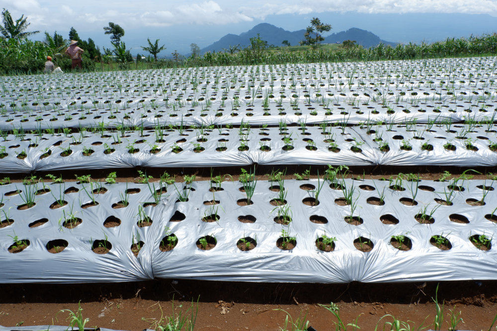 Ook biologisch afbreekbaar plastic vervuilt landbouwbodem