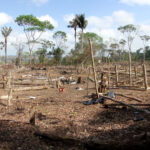 Ontbossing Amazone Brazilië