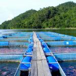 Tilapia-farm in Thailand
