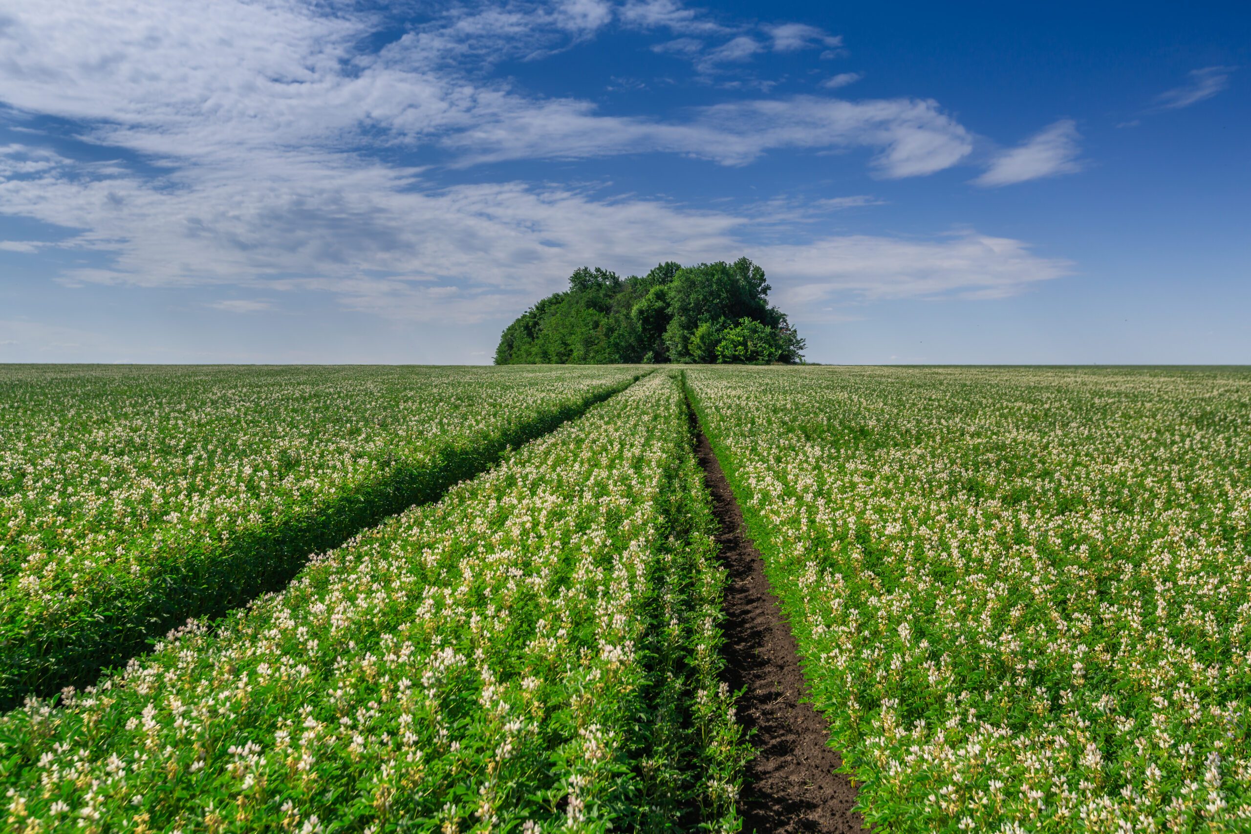 '100.000 hectare Hollands eiwitgewas is ambitieus'