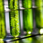 rijtje reageerbuisjes met groene vleoistoffen en algen.