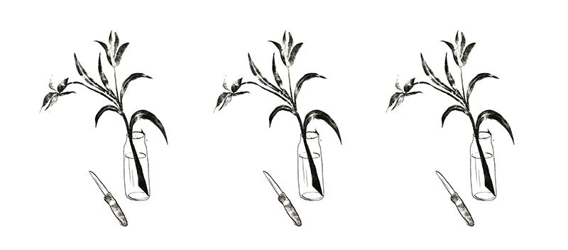 Weer wat wijzer bloemen schuin afsnijden