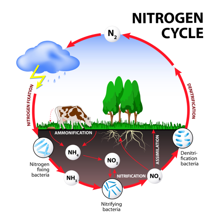 Don't forget water pollution by nitrogen