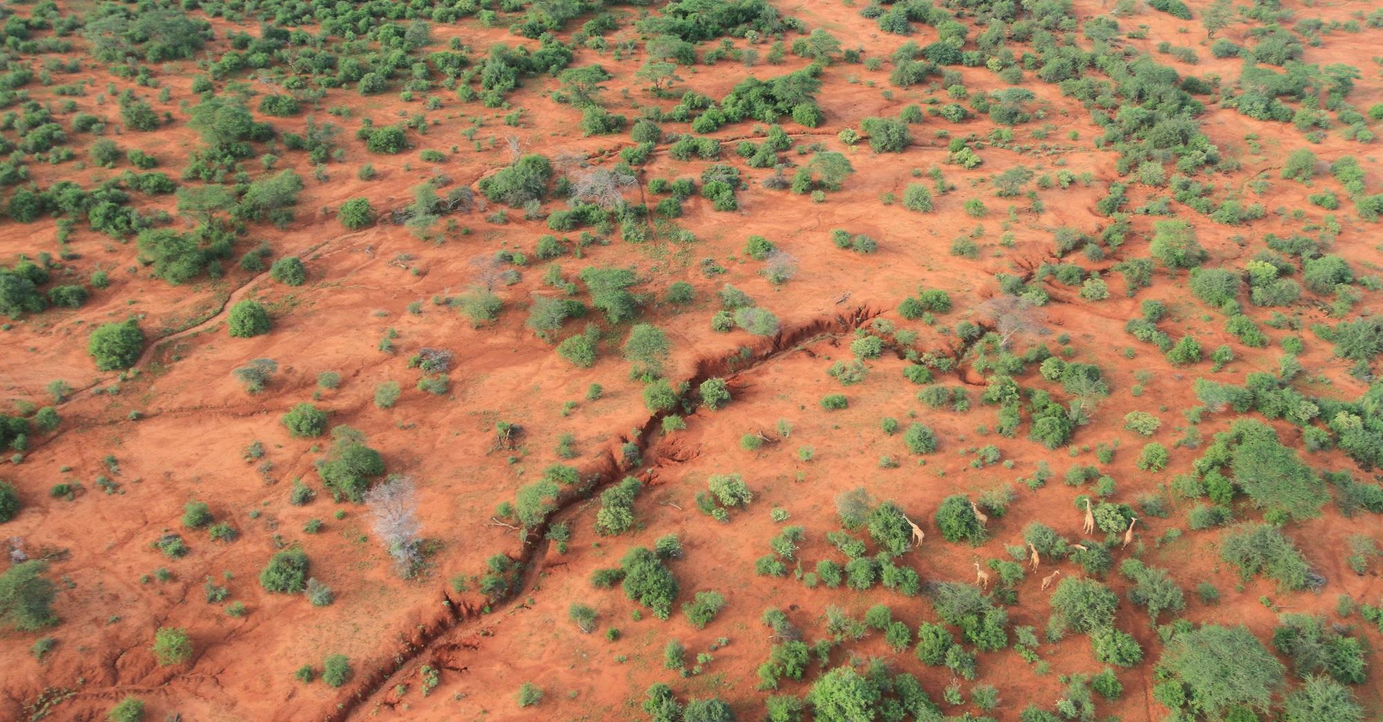 dieren in Afrika van bovenaf