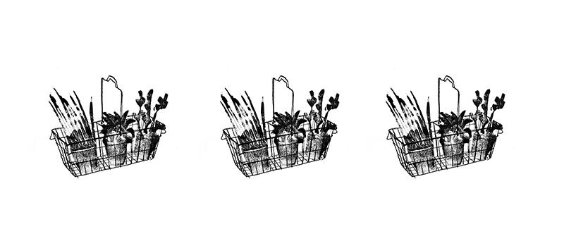 Weer Wat Wijzer: Waarom verpieteren kruidenplantjes uit de supermarkt zo snel?